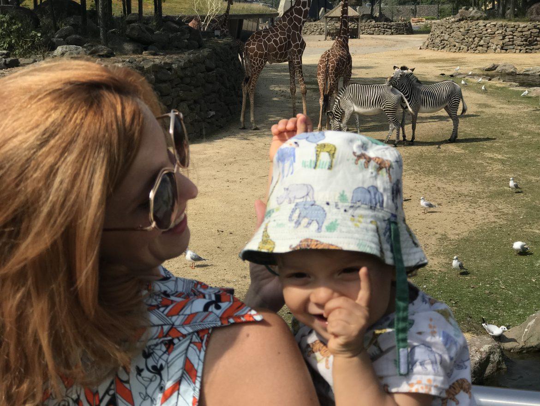 diversão de mãe e filho no zoo artis de amsterdam com girafa e zebra ao fundo